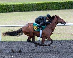 Flatter colt - $280,000